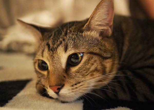 夜中ずっと元気な猫を寝かせる方法3つ