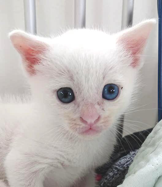 """カラスにさらわれてきた子猫の""""小雪""""物語"""