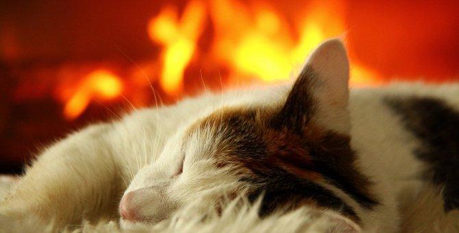 猫も冷え性になる?今すぐ対策したい7つの事