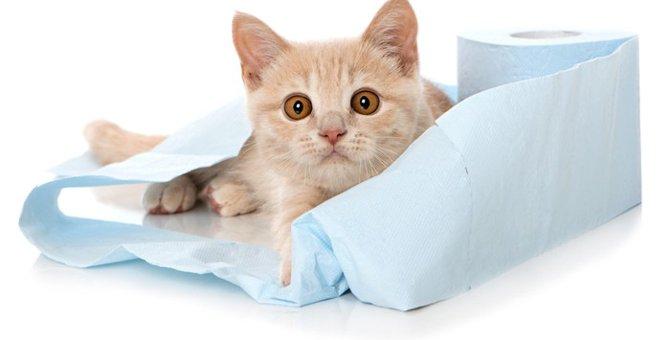 猫用トイレシートの利点と猫砂からの切り替え方