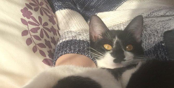 譲渡会では「猫からのテレパシー」を感じよう!声掛けされるのを待つ猫達の気持ち