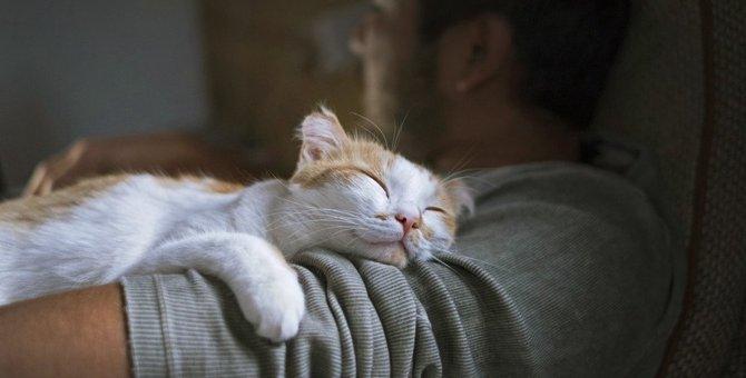猫が飼い主を『大好き』と感じる瞬間4つ