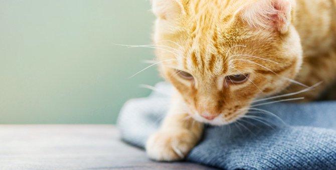 早期発見がカギ!シニア期の猫がかかりやすい代表的な病気2つ