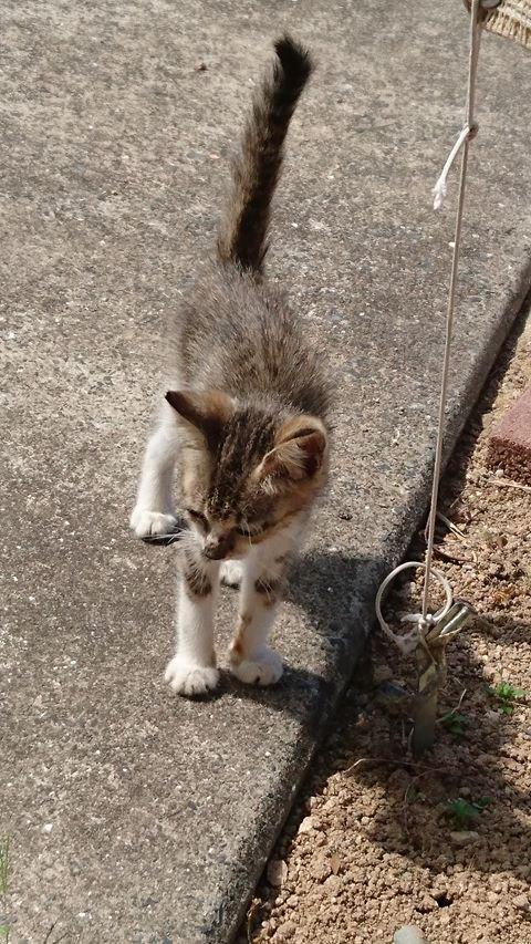 炎天下、5日間、呑まず食わずで泣き続けていた子猫