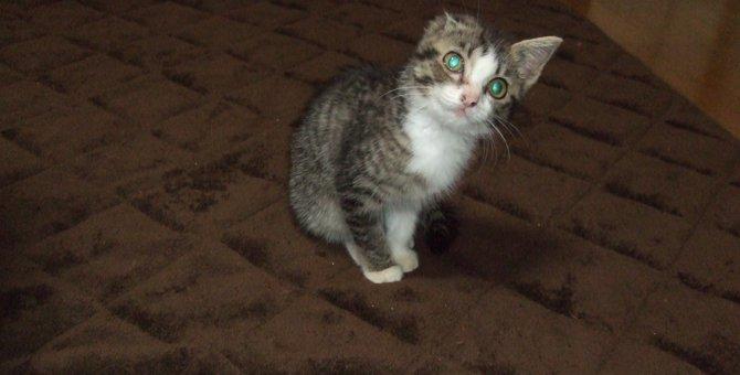 弱視の障害も克服!我が家のアイドル猫『ラッキー』との出会い