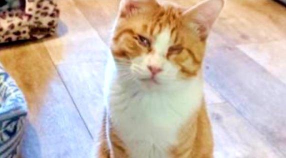 目にハンデを負った猫…愛されキャラが運命の家族を引き寄せた!