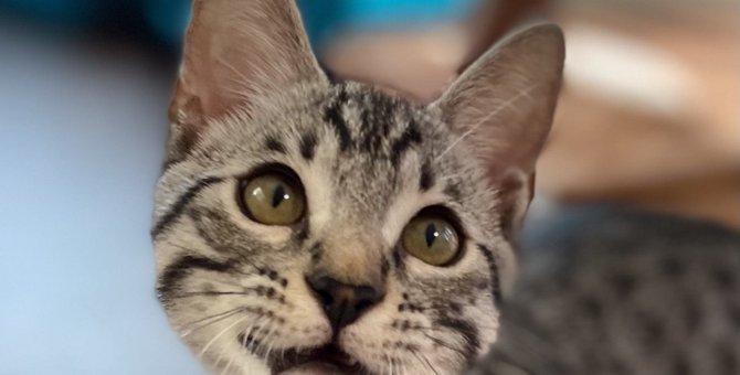 猫の驚くべき『危険回避の術』3つ!飼い主が今すぐやるべきトラブル防止策とは?