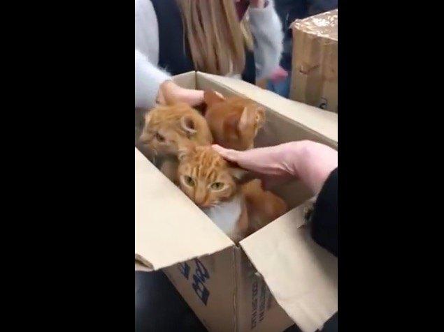 ダンボールで捨てられた11匹の猫が救われる