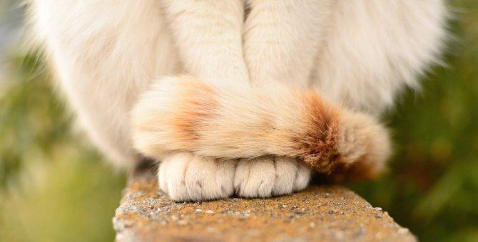 猫が『前足を揃えてお座り』している時の心理2つ