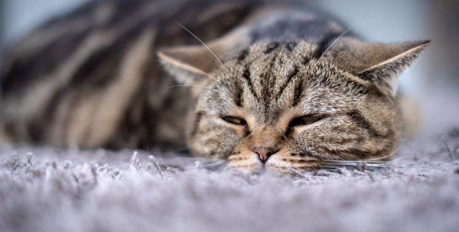 夏に急増!猫の危険な『食中毒』の症状4つと予防策