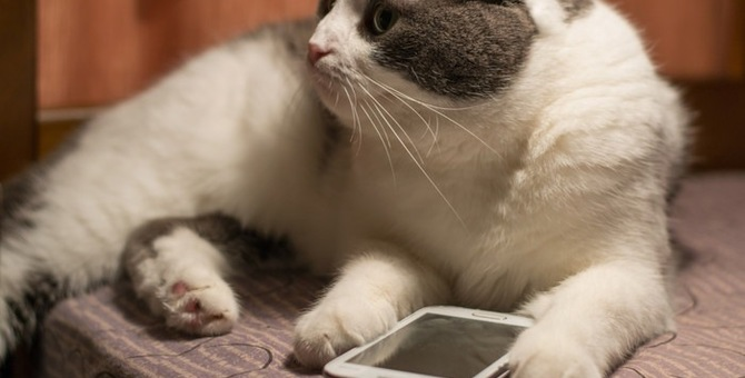 猫が喜ぶ人気のアプリおすすめ4選!