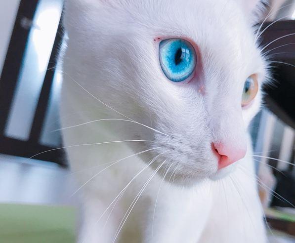 白猫画像33連発!美しくてかわいい魅惑の写真集