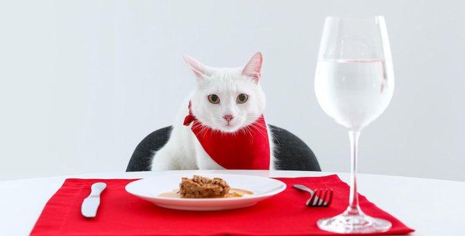 高齢猫が食事を食べない時の対処法と食事を楽しんでもらう工夫