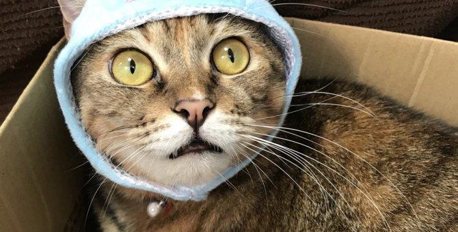 来年の干支『ネズミ』に猫たちが変身!お年賀の写真撮影に挑戦