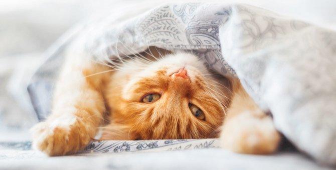めんどくさい時に猫がする6つの仕草