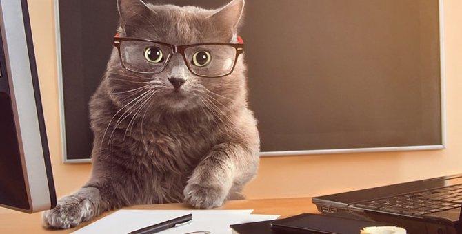 猫の印鑑おすすめ5選とその注意事項