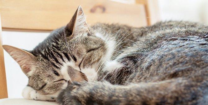 猫が『体調が悪い時』にしている眠り方5選!気持ちよく眠ってもらうためにも対策を