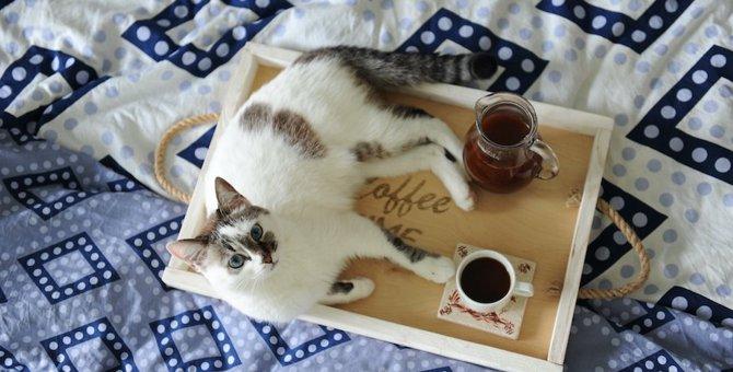 猫のコースターがほしい方必見!作り方からおすすめ商品までご紹介