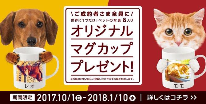 ★期間限定★世界に1つだけ!ねこちゃんの写真入りマグカップキャンペーン実施中!