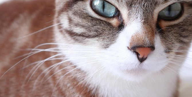 猫が『八つ当たり』するときにしがちなこと3つ