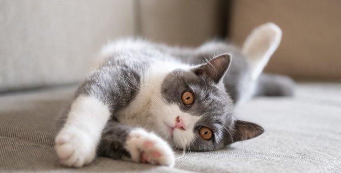 猫もしゃっくりするって知ってた?