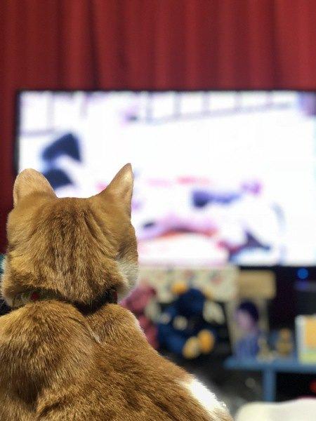 猫はテレビが好き?釘づけになる理由3つ