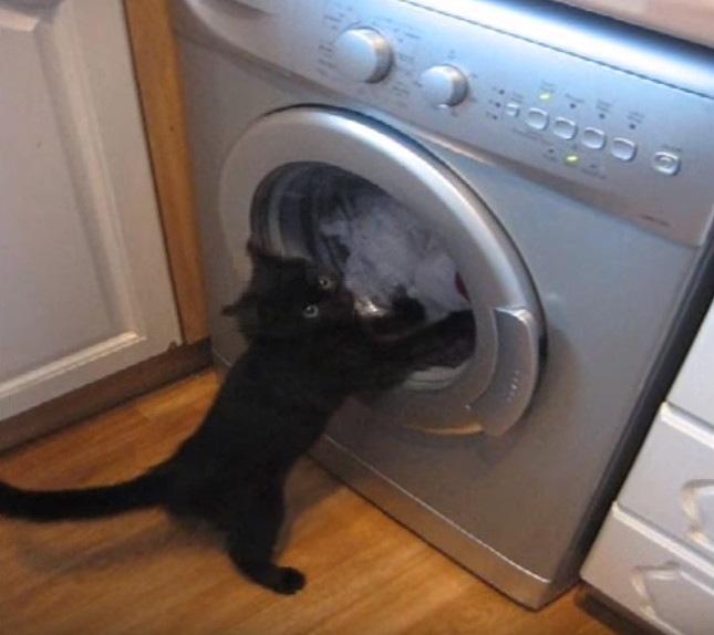 おりゃおりゃおりゃー!洗濯機に戦いを挑む子猫ちゃん