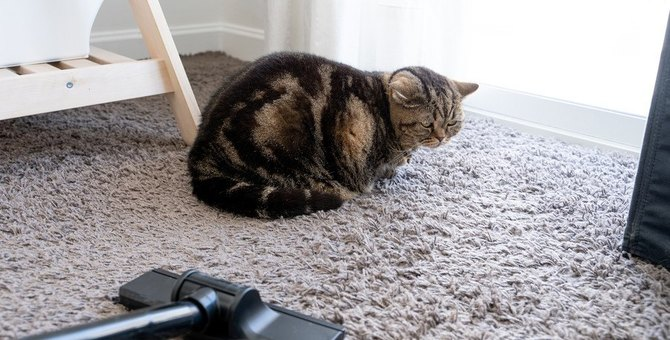 猫が大きな音を怖がる理由は?すぐにできる対処法2つ