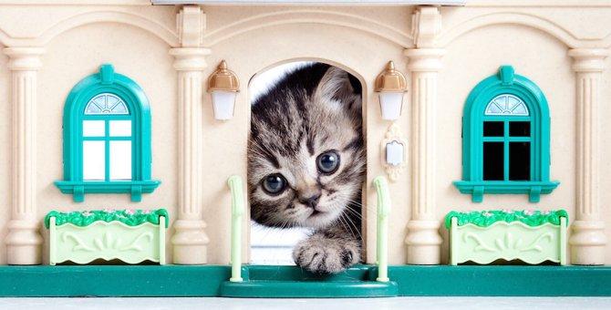 猫用ハウス人気ランキングベスト10!ハウスの選び方もご紹介