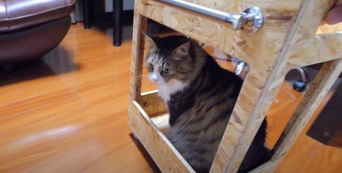 ワゴンカーでスイスイ!部屋の中を移動する猫ちゃん♪