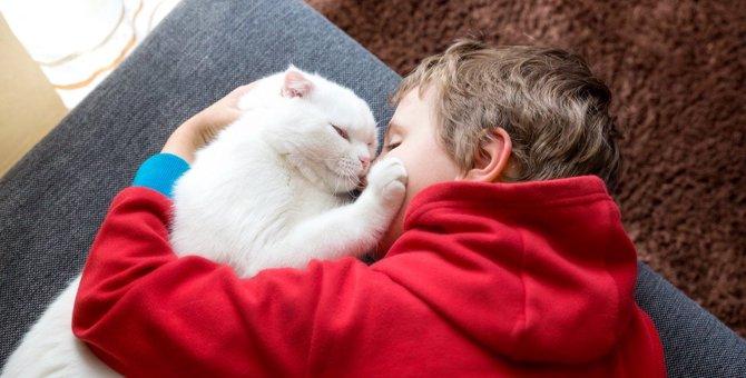 『人懐こい猫』がする態度4つ