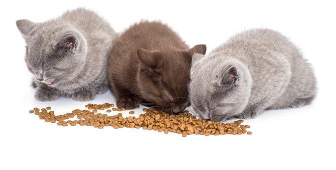 猫が下痢をする原因とは?考えられる病気と対処法