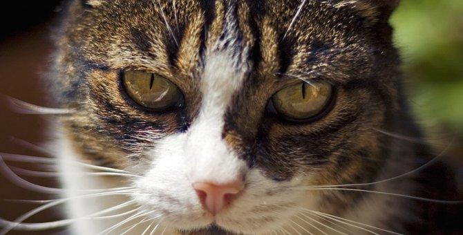 ワル猫が怖い!けど可愛い!カレンダーやおすすめグッズ