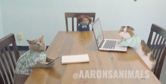 猫が人間の会議にでたら…ある物をみせると目の色変わる