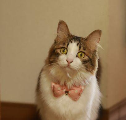 猫が追いかけたくなる『ベタ惚れ飼い主』になる方法5つ
