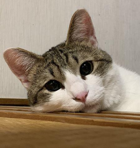 猫に依存されやすい人の特徴3つ