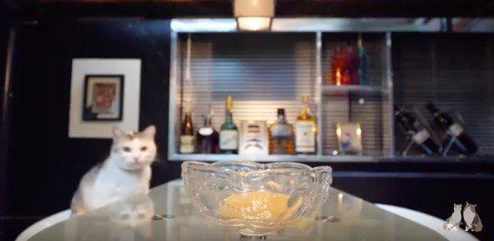 「マスター、ちゅ~るを一つ」Barでのひと時を楽しむ大人猫さん