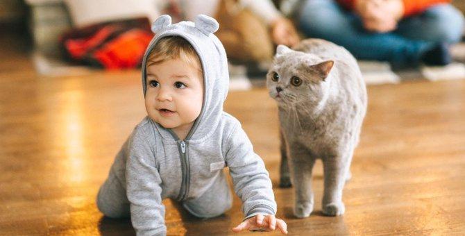 飼い主を子供扱いしている猫の9つの行動