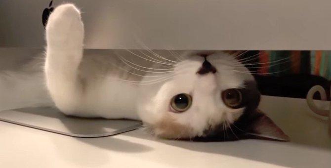 難しい年頃な猫ちゃん、チョッカイを出すのは好きだけど出されるのは嫌!