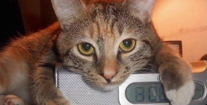 ひとりぼっちで鳴く子猫…運命の出会いで掴んだ未来とは?
