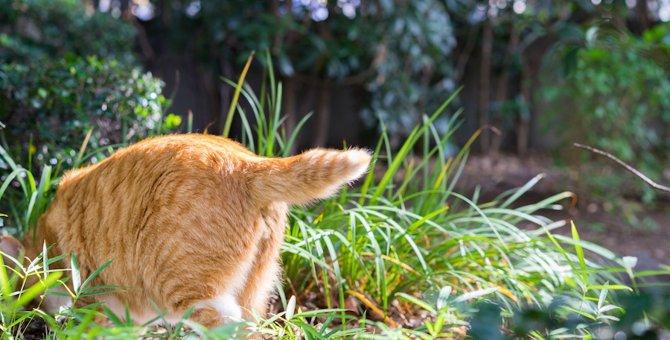 猫がお尻を撫でて欲しい時にする4つの仕草