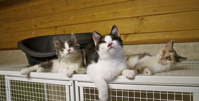 愛猫との災害避難に備えて飼い主さんの心構えと準備