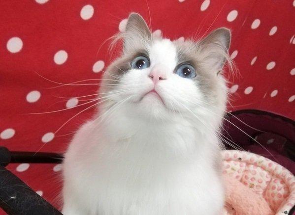 猫の匂いは何の香り?どうしていい匂いがするの?