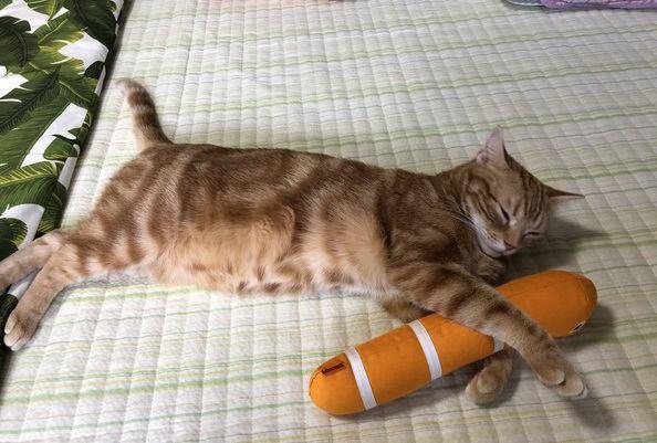 猫のお腹がタプタプしているのは肥満じゃないの?