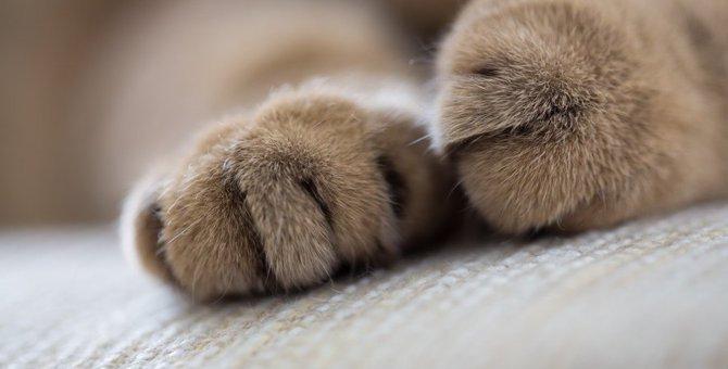 どこのパーツか知ってる?猫の『パウ』の魅力と役割を紹介
