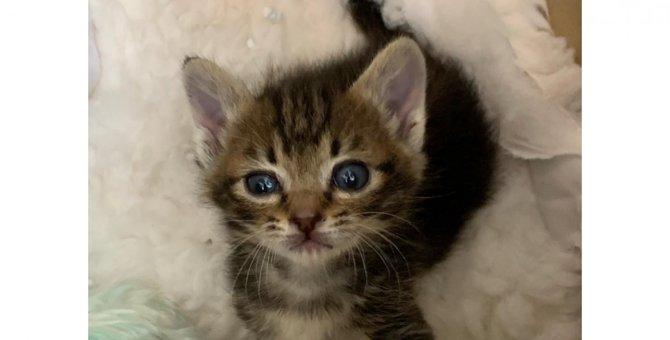 保護猫を家に迎えた時、最初にすべき5つのこと