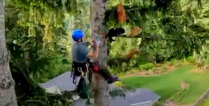 木の枝にしがみついた猫…救出の手に応じず保護活動は大苦戦!