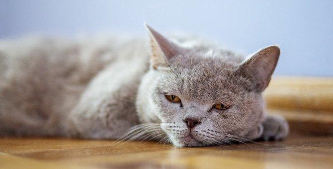 猫のうつ病に気を付けて!初期症状4つ