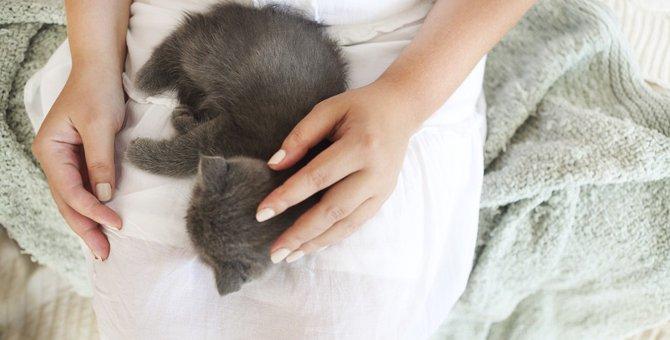 猫が飼い主の上で寝る時の3つの気持ち