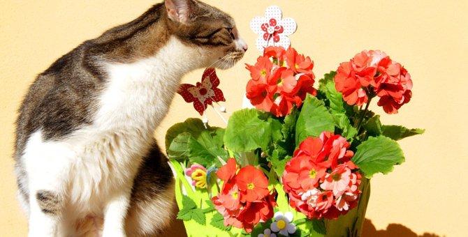 猫にアロマは危険!その理由について